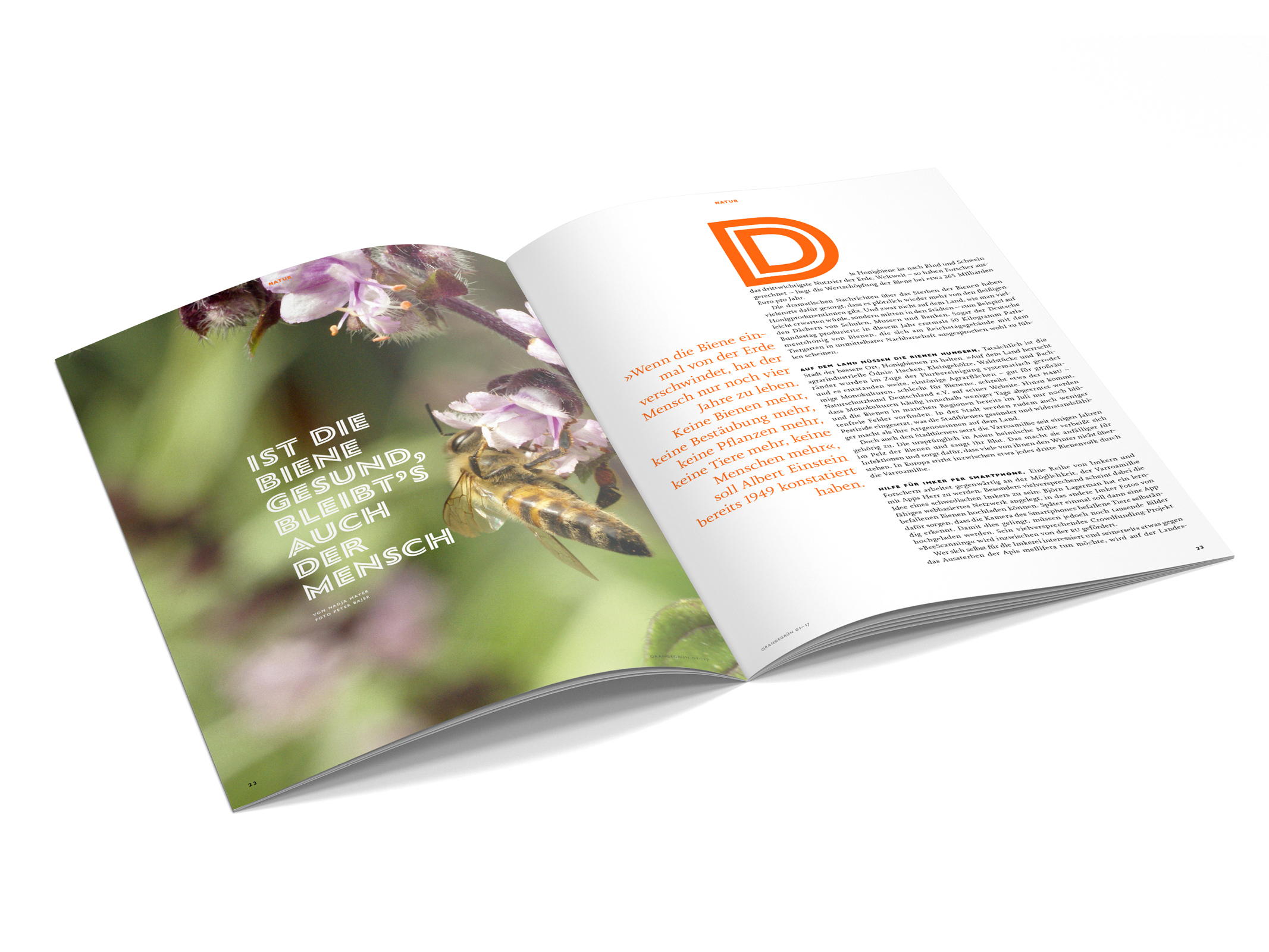 Orangegrün – Poarangan Brand Design7